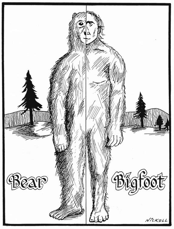 Bear vs. Bigfoot comparison drawing