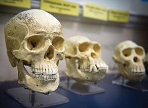 series of skulls